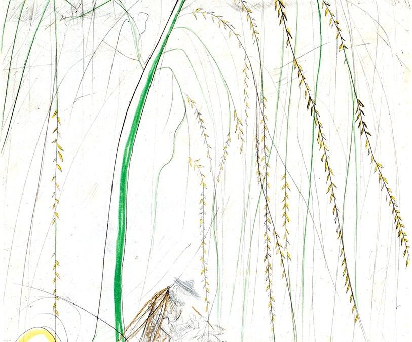Ronsard – Weeping Willow
