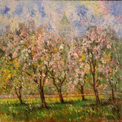 Cherry Blossom Central Park