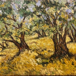 Olive Grove Before Harvest